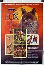 Image of The Glacier Fox