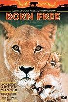 Image of Born Free