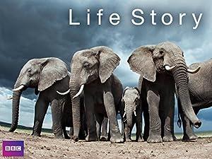 Life Story