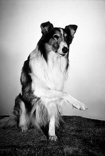 Lassie the Dog Picture