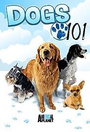 English Mastiff/Chinese Crested/Italian Greyhound/Border Collie/Lhasa Apso Poster