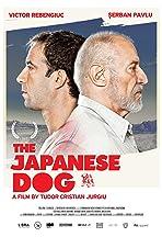 Câinele Japonez