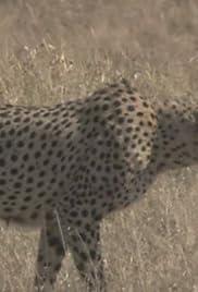Cheetah vs. Antelope Poster