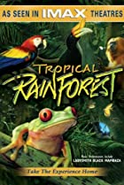 Image of Tropical Rainforest