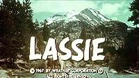 Lassie's Litter Bits