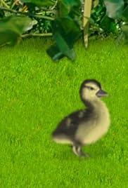 Duck, Duck, June Poster