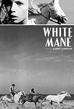 White Mane