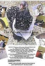 The Adventures of Lass