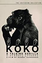 Image of Koko: A Talking Gorilla