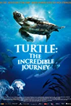 Image of Turtle: The Incredible Journey