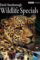 Image of Wildlife Specials