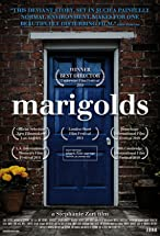 Primary image for Marigolds