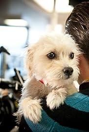 Dog Eat Dog(2012) Poster - Movie Forum, Cast, Reviews