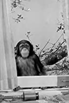 Image of The Addams Family: My Son, the Chimp