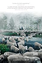 Image of Sweetgrass