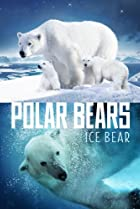 Image of Polar Bears: Ice Bear