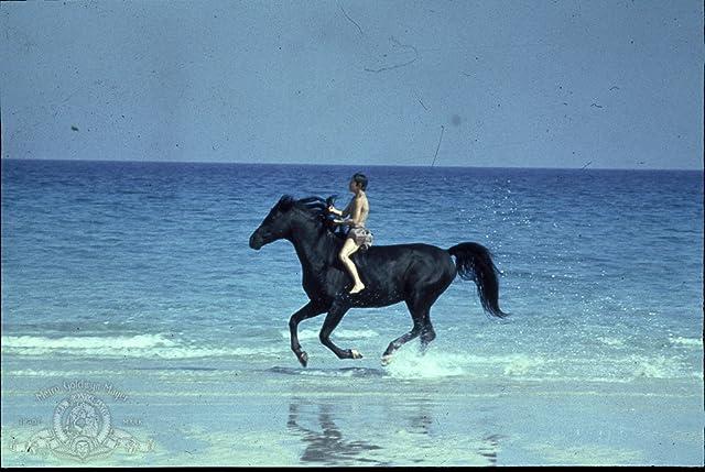 Kelly Reno in The Black Stallion (1979)