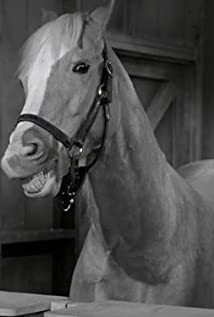 Mister Ed Picture