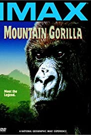 Mountain Gorilla Poster