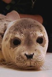 Ocean Animal Emergency Poster