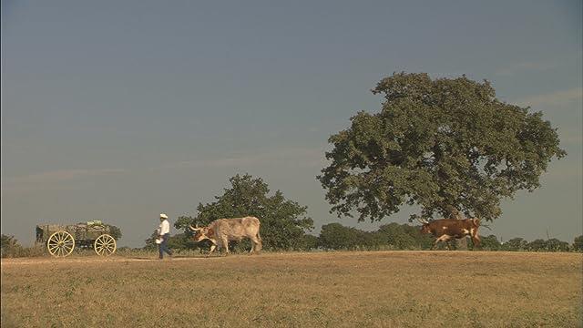 Wild Horse, Wild Ride (2011)