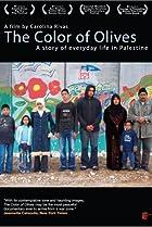 Image of El color de los olivos