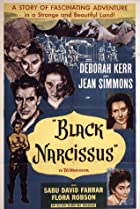 Image of Black Narcissus