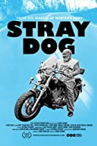 Image of Stray Dog