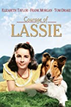 Image of Courage of Lassie