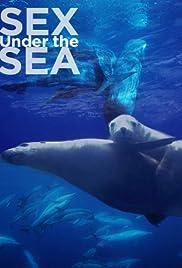 Фильм море и секс фото 114-900