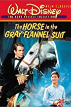 Image of The Horse in the Gray Flannel Suit
