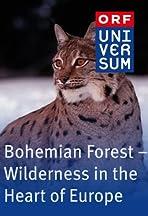 Böhmerwald - Wildnis im Herzen Europas