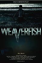 Image of Weaverfish