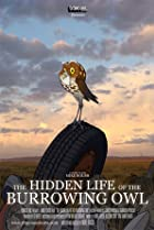Image of The Hidden Life of the Burrowing Owl