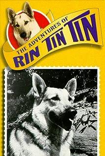 Rin Tin Tin II Picture