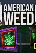 Image of American Weed