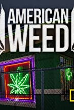 Primary image for American Weed