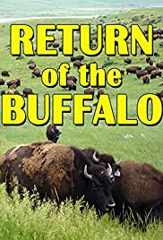 The Return of the Buffalo: Restoring the Great American Prairie Poster