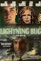 Image of Lightning Bug