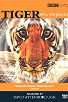 Image of Tiger: Spy in the Jungle