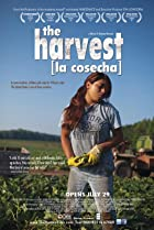 Image of The Harvest/La Cosecha