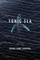 Image of Sonic Sea