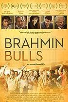 Image of Brahmin Bulls