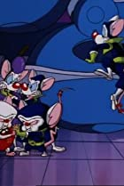 Image of Pinky and the Brain: Brain of the Future