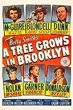 A Tree Grows in Brooklyn(2017)