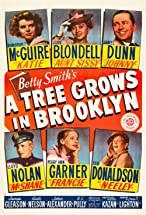Primary image for A Tree Grows in Brooklyn
