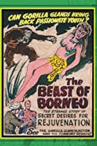 Image of The Beast of Borneo