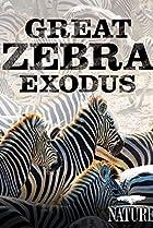 Image of Nature: Great Zebra Exodus