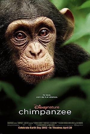 Chimpancés -