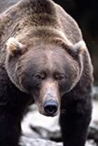 Image of The Grizzly Man Diaries